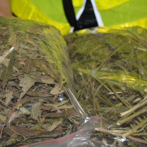 W Kębłowie zatrzymano 33-latka – hodował konopie w rowach melioracyjnych