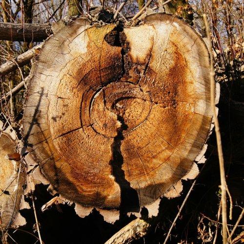 Rosnówko – tragedia podczas wycinki drzew